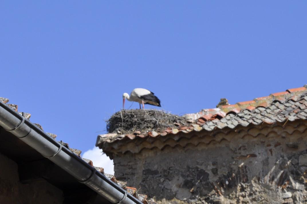 Cigonya al terrat d'una casa de Pedraza de Segòvia