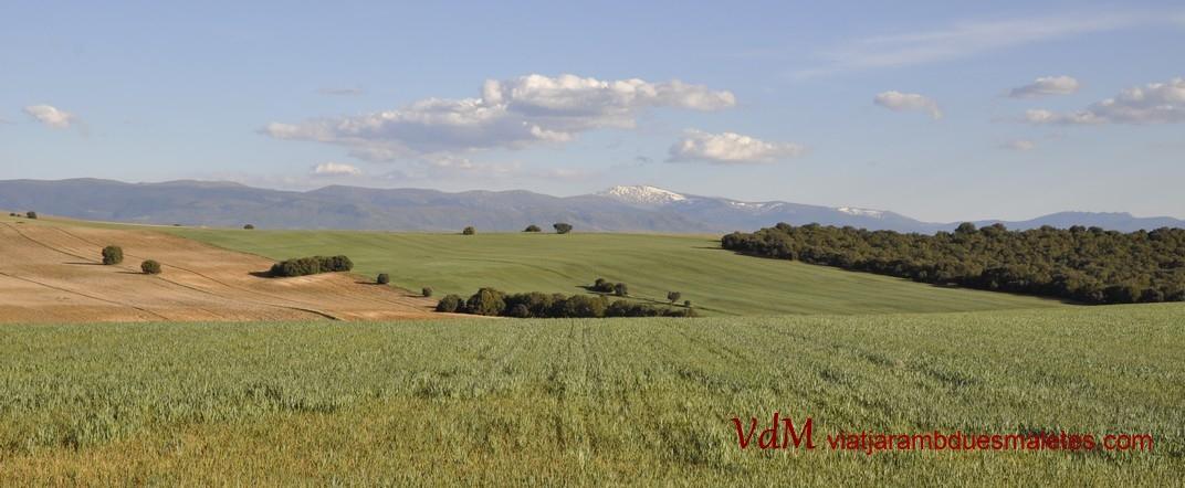 Cultiu de cereal de Turégano de Segòvia