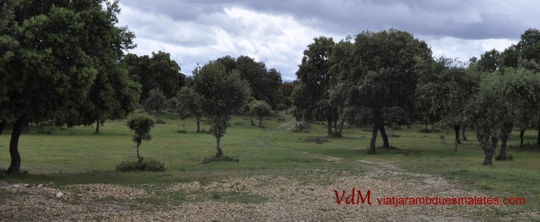 Devesa de Salamanca