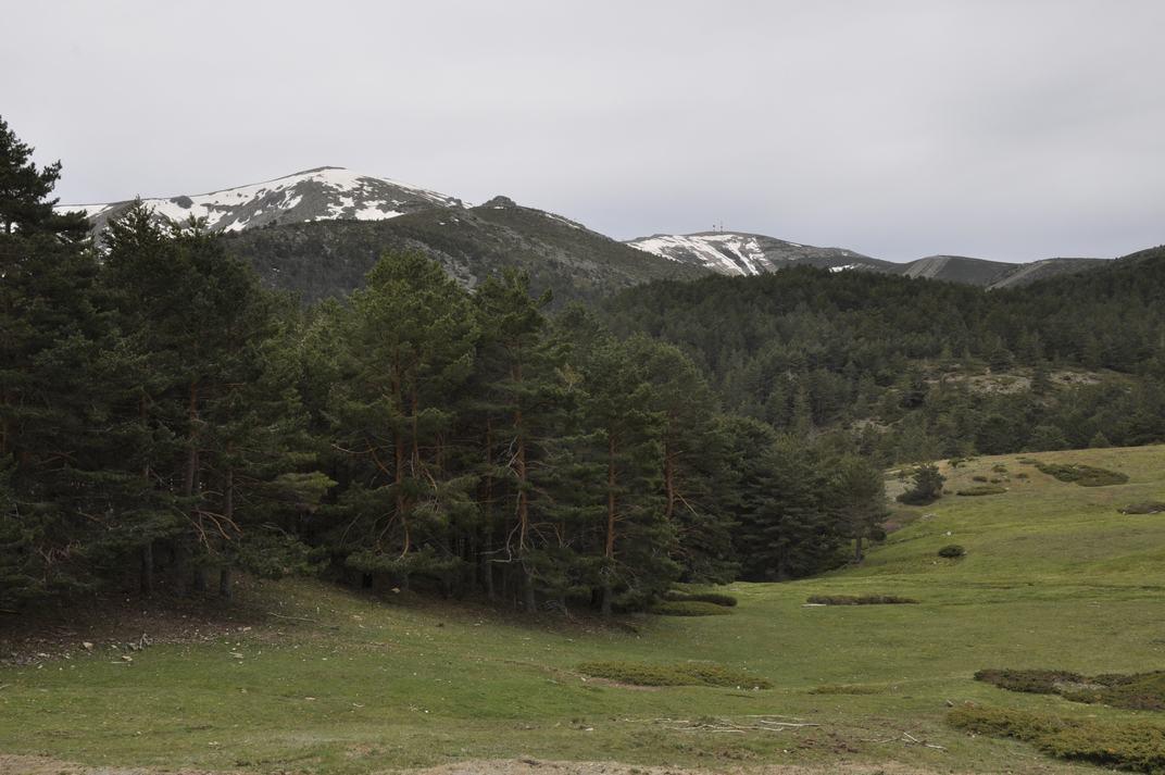Masses boscoses del Parc Nacional de Guadarrama de Madrid