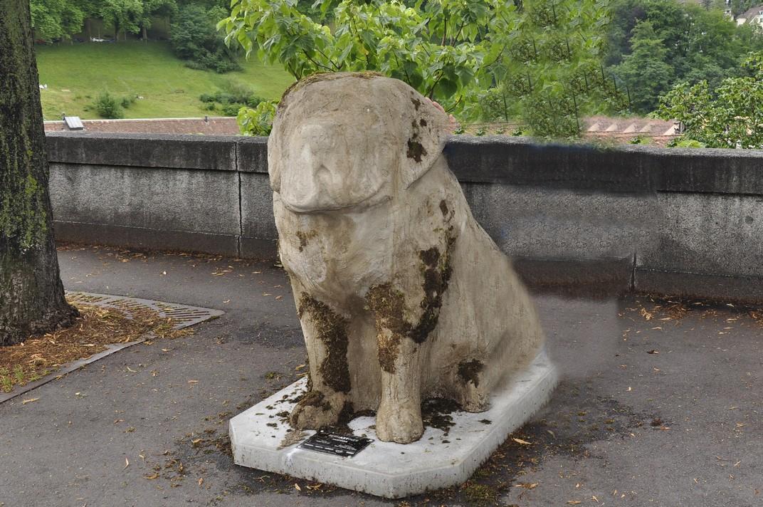 Gos Sant Bernat de la ciutat de Berna