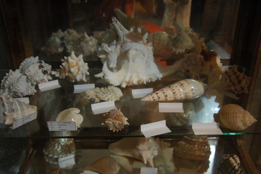 Cargols de mar de La Giralda de L'Arboç