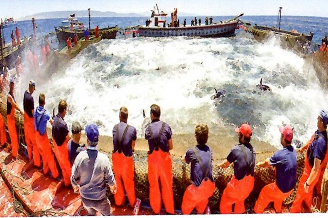 Pesca de l'Almadrava - Vejer de la Frontera