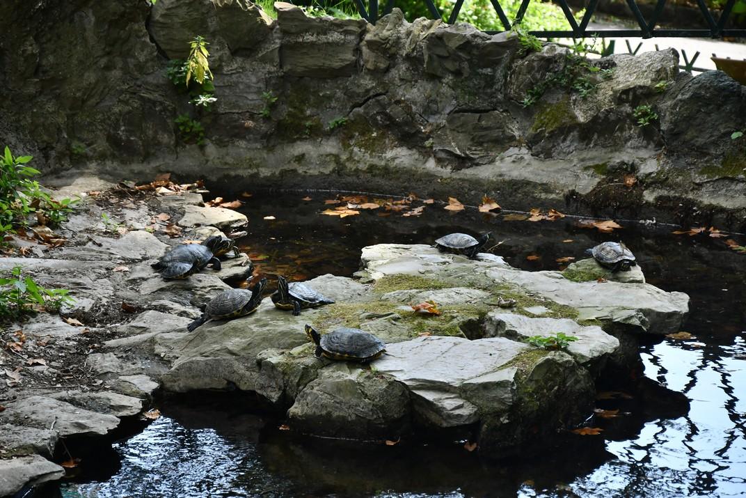Estanc de les tortugues del parc de la Villetta Di Negro de Gènova