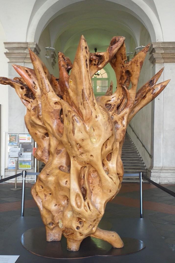Olivera exposada en el Palau Ducal de Gènova