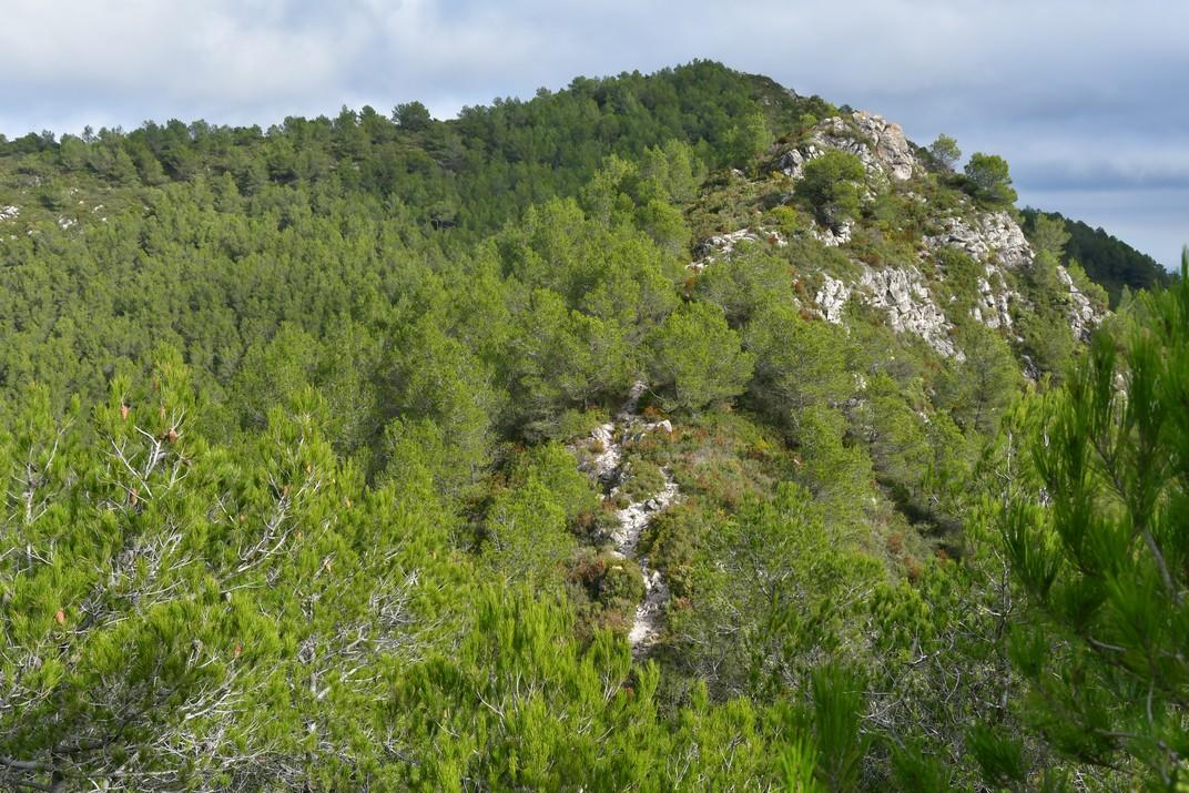 Sender de la carena cap al Puig de la Talaia del Montmell