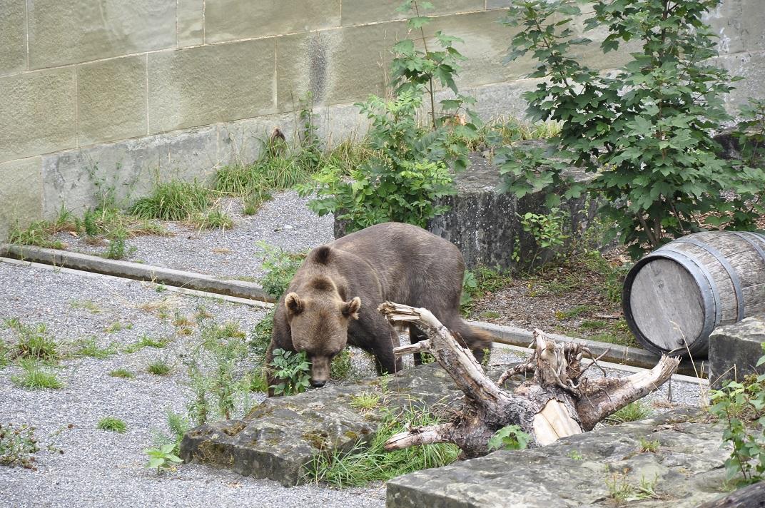 Parc dels ossos de Berna