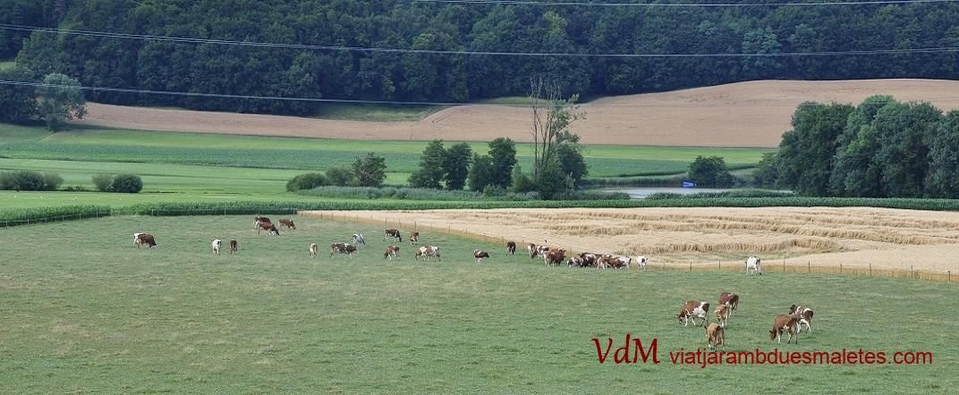 Ramaderia bovina de Friburg