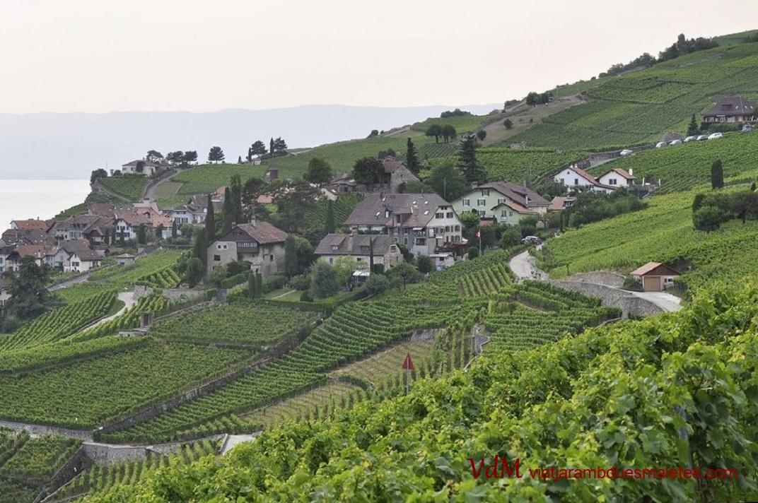 Vinyes de Lavaux