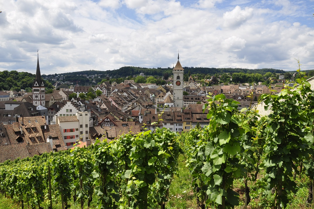Vinyes del Munot de Schaffhausen