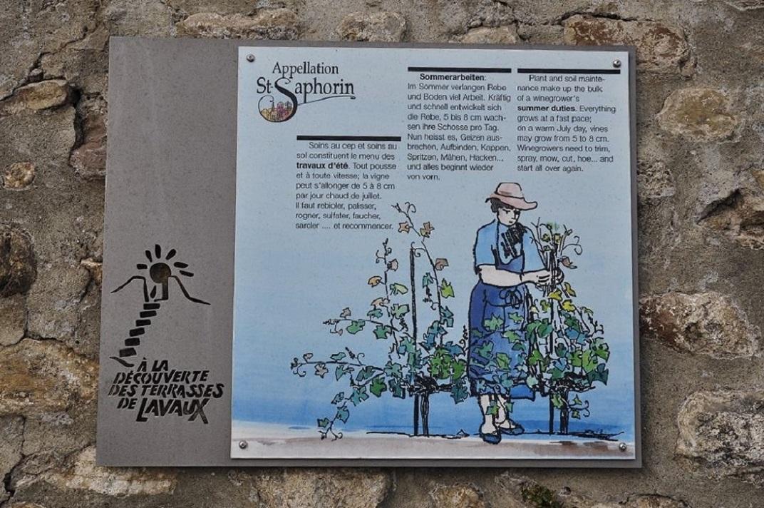 Vinyes en terrasses de Saint-Saphorin de Lavaux